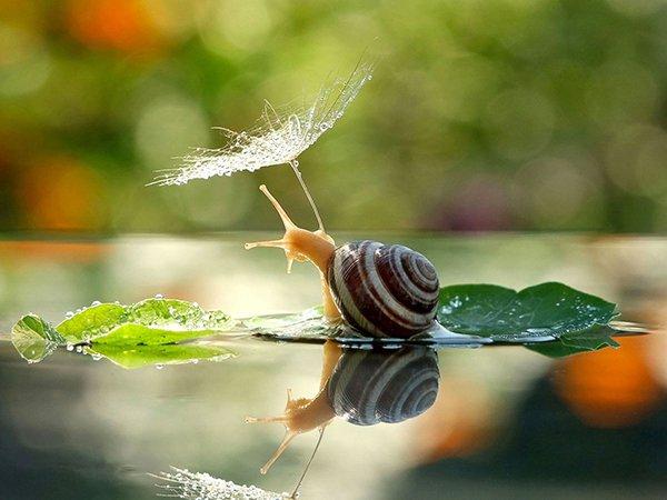 Mơ thấy ốc bơi dưới nước